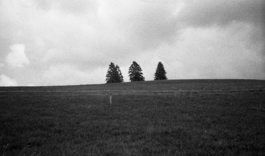 Three trees.
